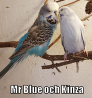 Undu7later Mr Blue och Kinza
